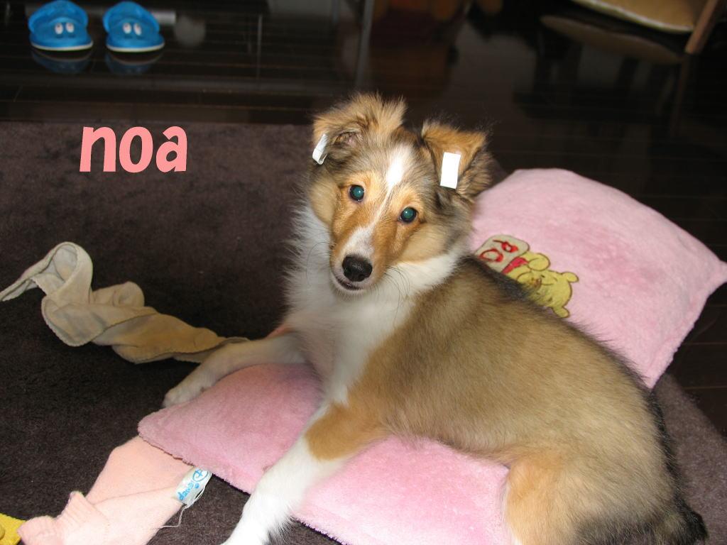 Noa0804